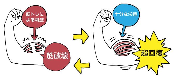 筋肉痛でも筋トレはOK?NG?超回復で強くなるしくみを徹底解説!のサムネイル画像