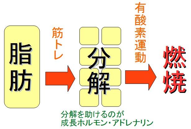 筋トレと有酸素運動の順番はどっちが先?プロテインを取る時間は?のサムネイル画像