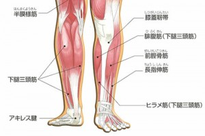 肉離れの症状と治療方法について。原因と痛み、処置方法などのサムネイル画像