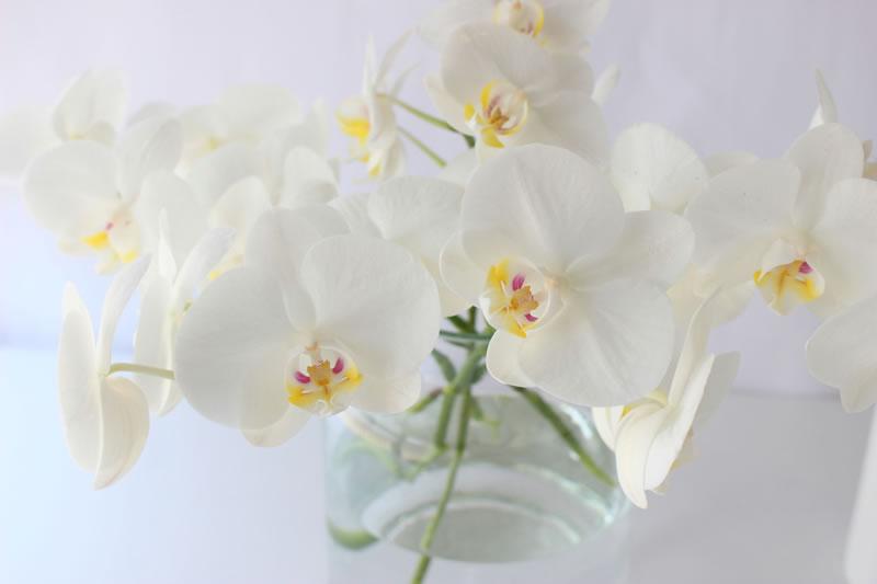 お正月の花の生け方・アレンジ方法!花の意味や種類も紹介のサムネイル画像