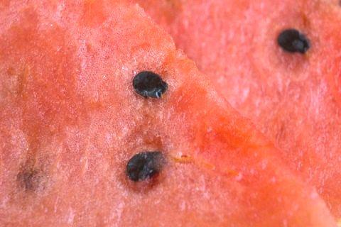 スイカの栄養にはどんな効能が?カロリーも気になる!皮や種も食べられるらしい!のサムネイル画像