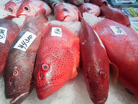 バラハタの食べ方!沖縄では普通だけど毒成分は?スジアラとは違う?のサムネイル画像
