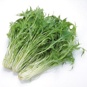 水菜を冷凍保存したい!正しい方法や賞味期限を調べてみた!のサムネイル画像