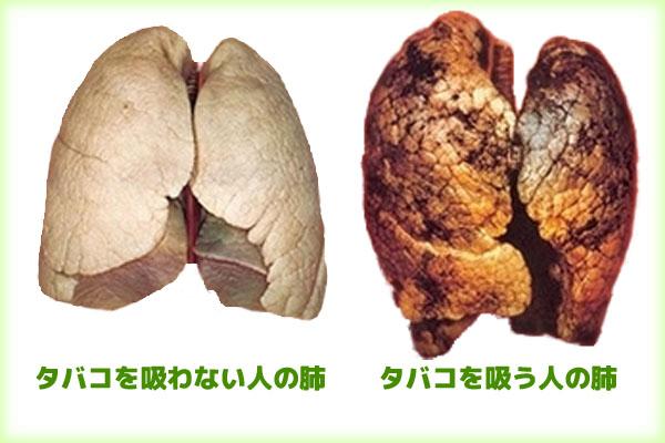 プルームテックに含まれるニコチン・タールの量は?たばことの害の違いは?のサムネイル画像