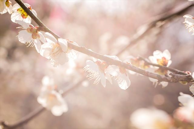 3月の挨拶文・時候の挨拶とは?手紙に役立つ例文や季語を紹介!のサムネイル画像
