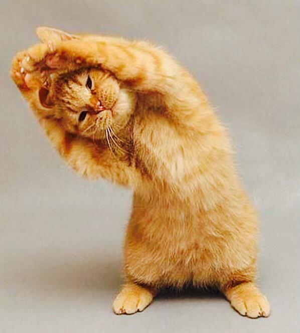 僧帽筋のストレッチでこりをほぐそう!痛みや肩こりに効果的なやり方まとめのサムネイル画像