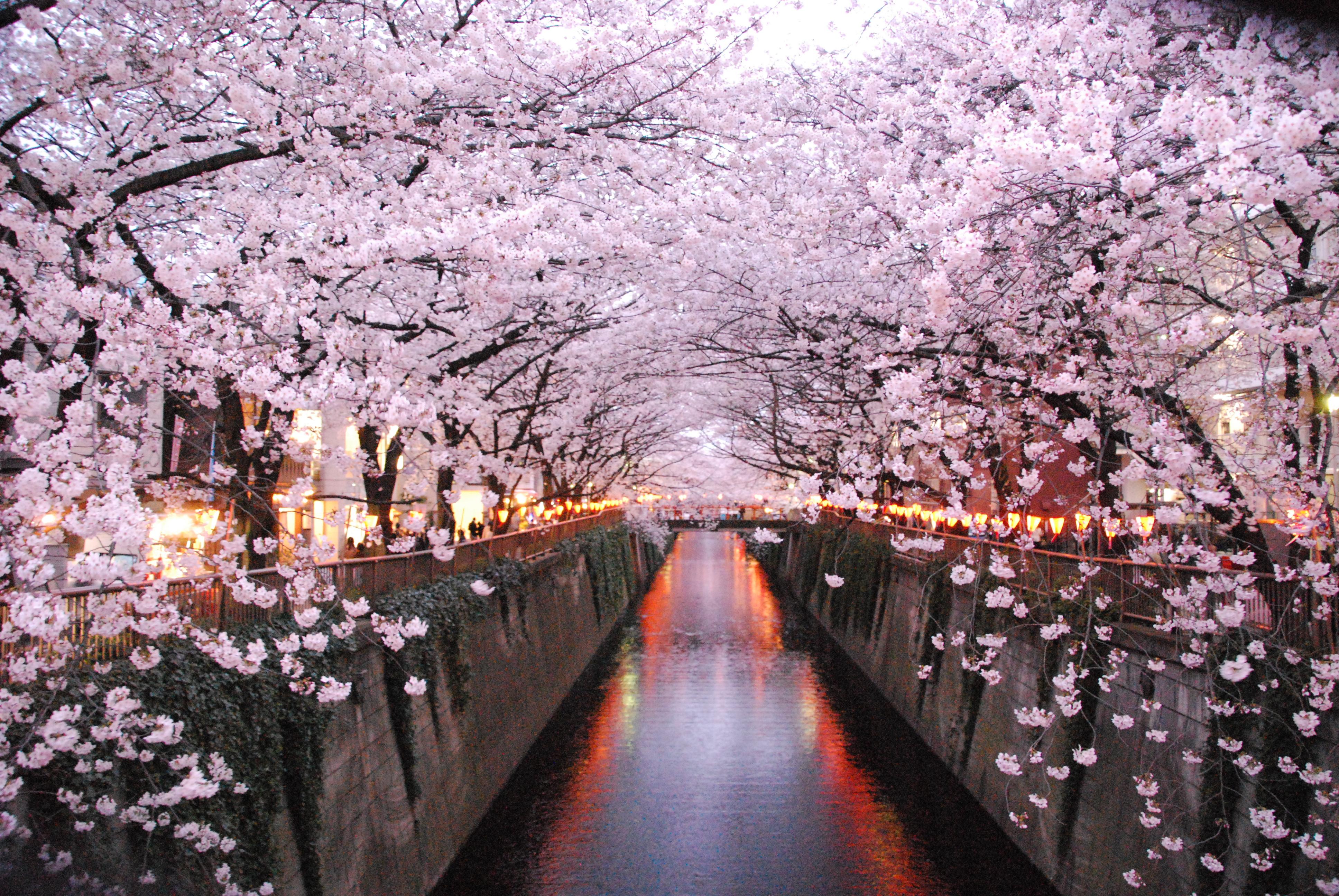 目黒川沿いのお花見スポット特集!お花見出来るレストラン&クルーズも紹介 | Pinky[ピンキ-]
